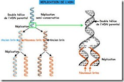 méthylation de l'adn