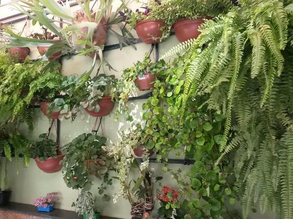 jardins-verticais-como-fazer-como-escolher-dicas-fotos-7