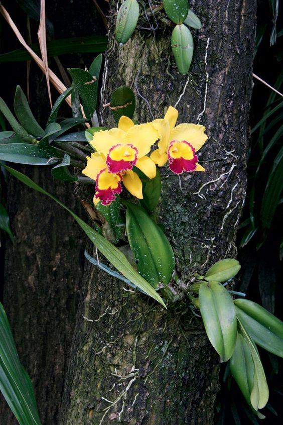cuidar-de-orquideas-01