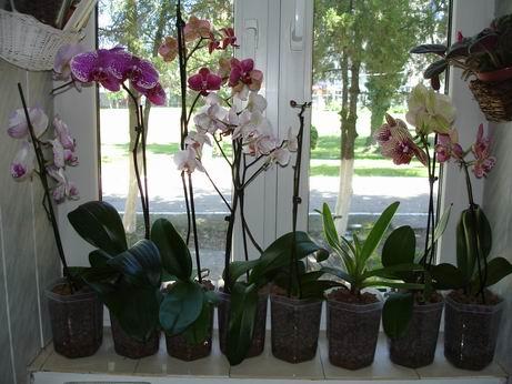 cuidar-de-orquideas-12