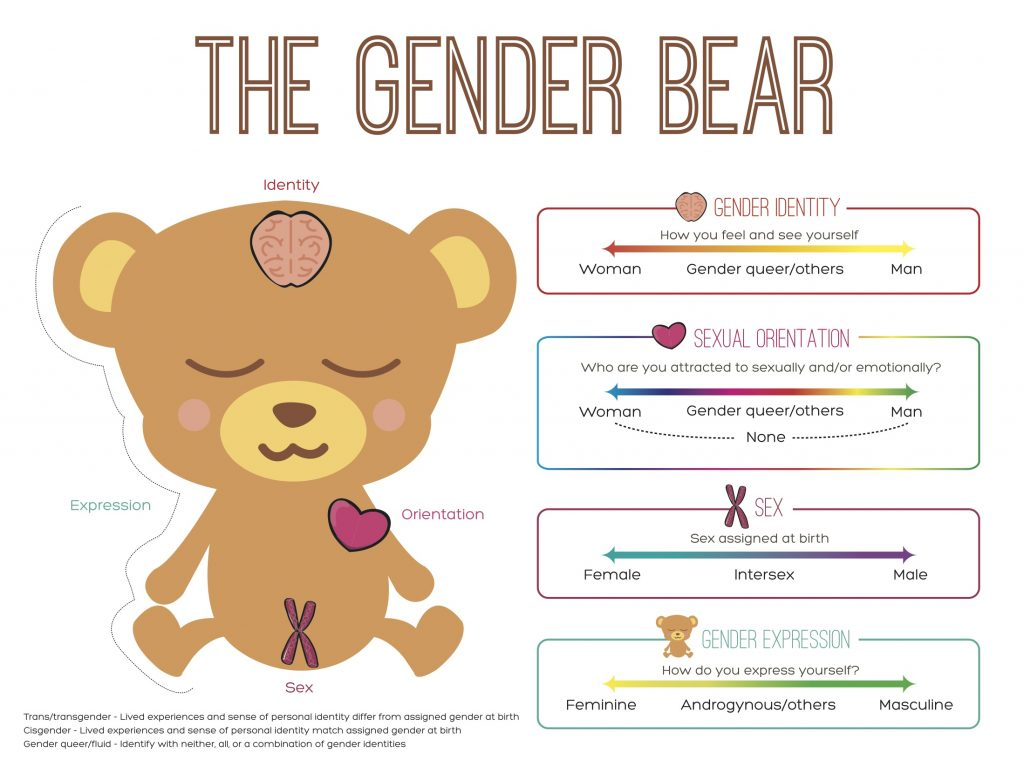 The Gender Bear
