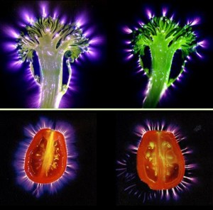 Biophotonics-the-Science-behind-Energy-Healing-Kirlian-images-of-raw-vs-cooked-food-300x296