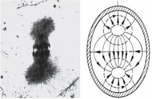 Biophotonics-the-Science-behind-Energy-Healing-mitotic-pattern-and-biophoton-light-field