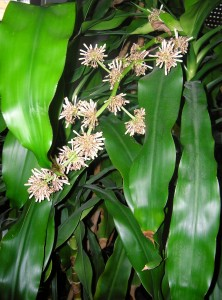 Your-Cells-Are-Listening-How-Talking-To-Your-Body-Can-Help-You-Heal-Dracaena-Fragrans-222x300