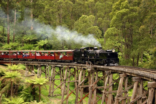 The  steam train chugging along at the Dandenong Ranges..