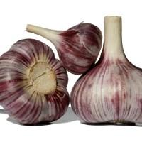 Plant your Garlic!
