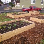 Raising a garden bed: build or buy?