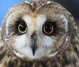 Owl6A