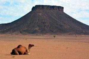 colina-camello
