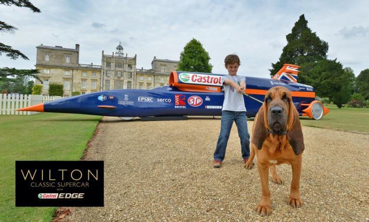 WiltonHouseWCS2014_Bloodhound_G6