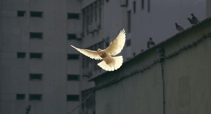 Joe Biden's Peace Force?