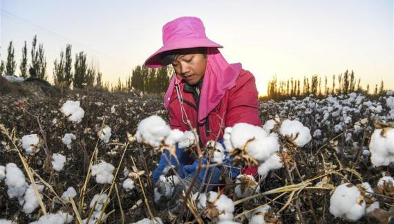 Why Western mudslinging has failed to dampen Xinjiang cotton