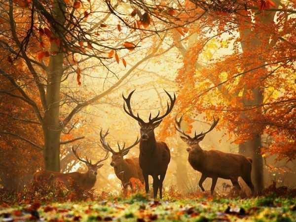 日本酒:秋鹿・秋の鹿たち