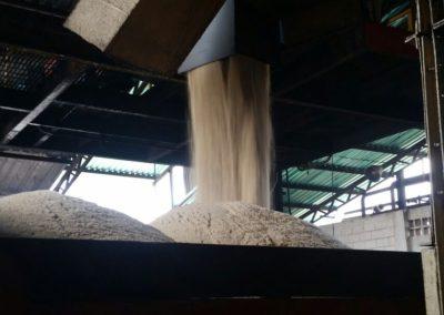 Centrales azucareros estatales son incapaces de garantizar el acceso oportuno y permanente del producto como prometió el presidente Chávez