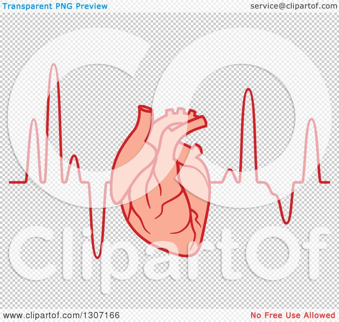Clipart Of A Human Heart Over An Electrocardiogram Graph