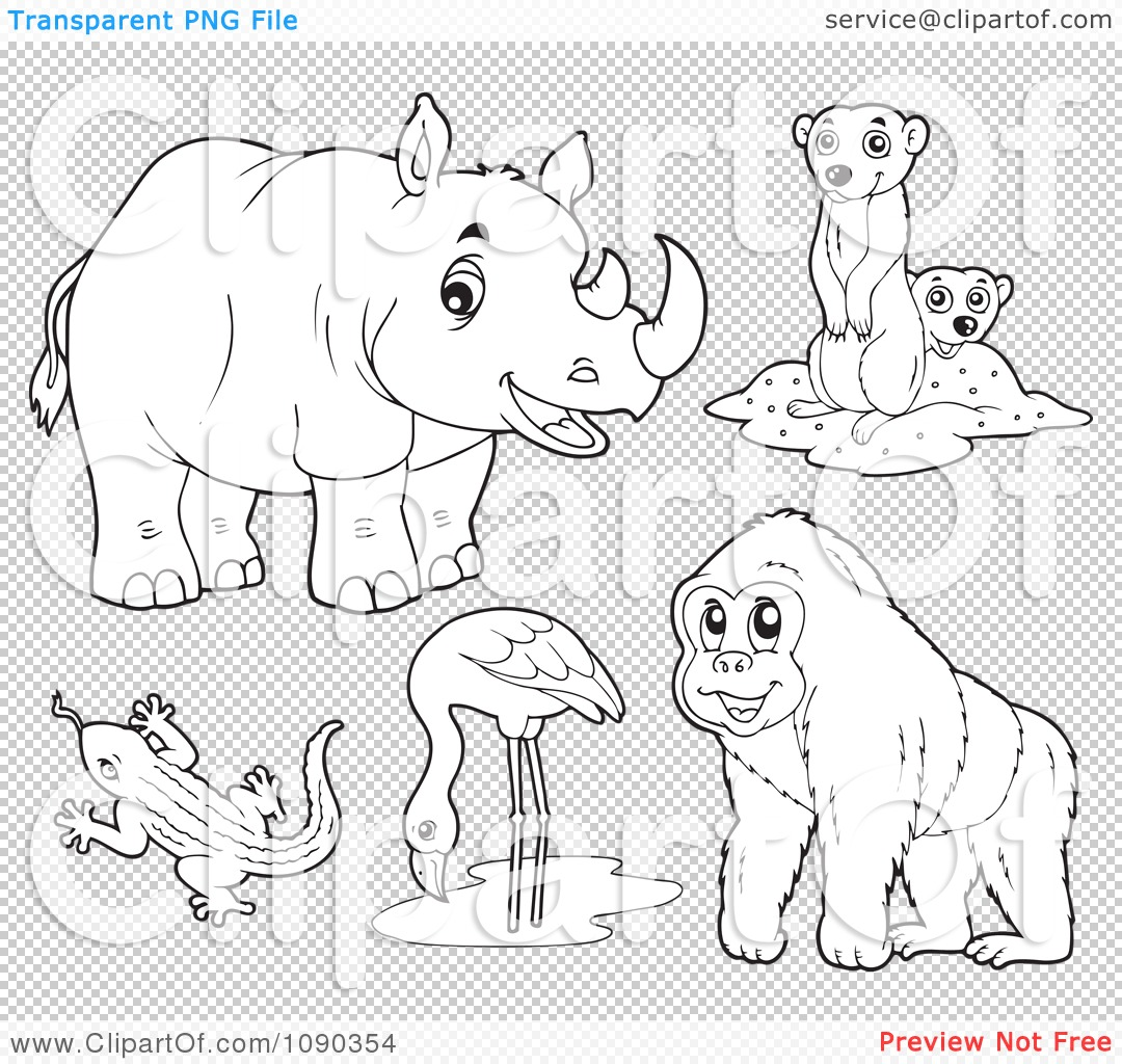 Meerkat Coloring Pages Coloring Pages