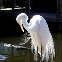 Gatorland: In the Realm of Birds and Crocodilians