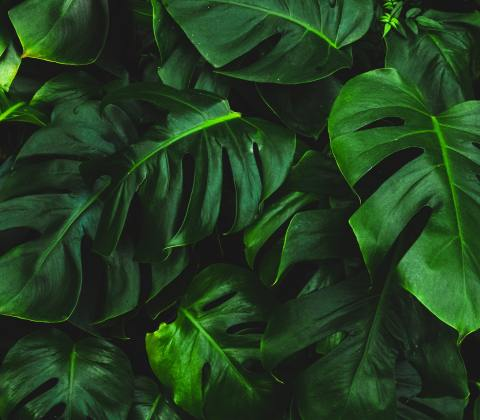 Foglie e piante in musica