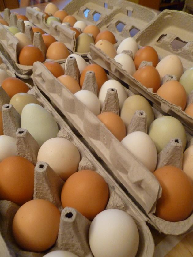 Buy Eggs In Paper Cartons Trash Backwards Blog