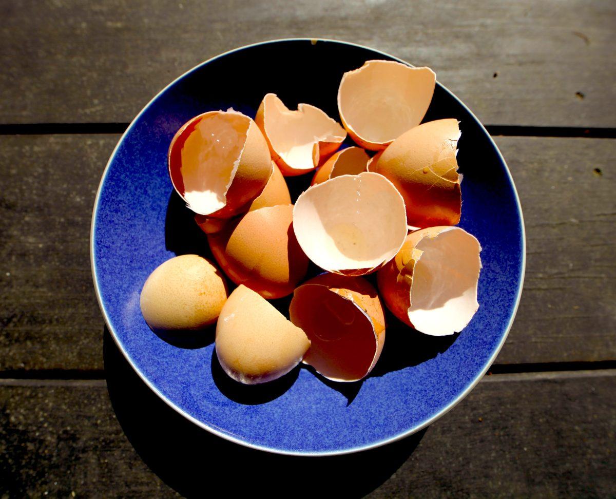 33 Excellent Egg Shell Reuses Trash Backwards Blog