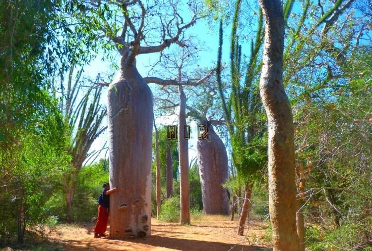 la energía de los árboles