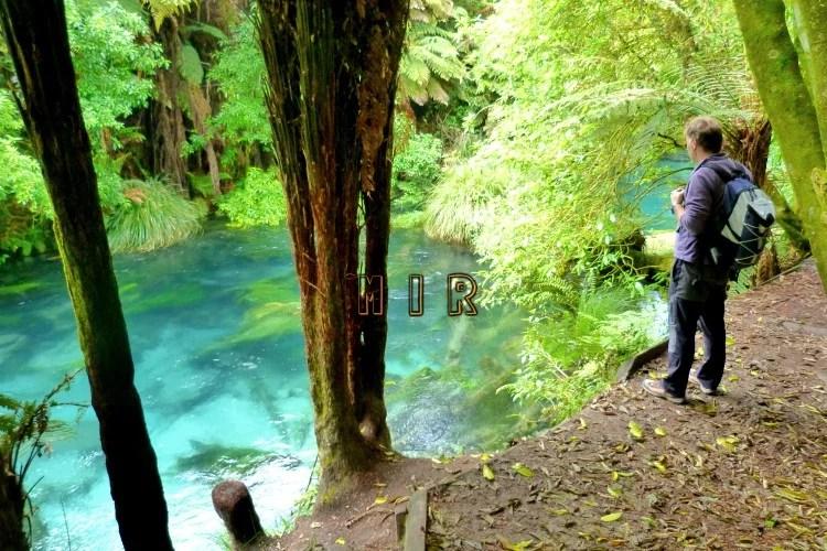 Te Waihou Walkway, Blue Spring
