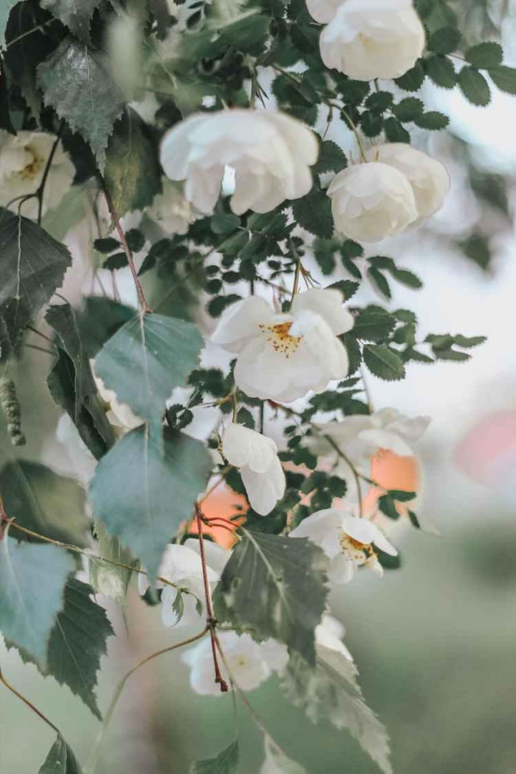 white flowers blooming in garden