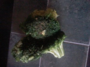Broccoli Day 6