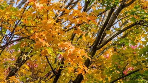 2016-10-25-fall-color-no-2