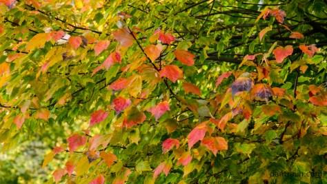 2016-10-28-fall-color-no-5