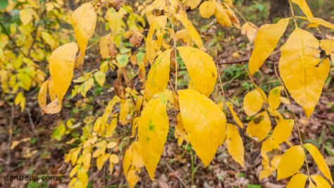 2016-10-29-fall-color-no-6