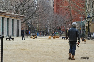 Washington Square Park (2)t