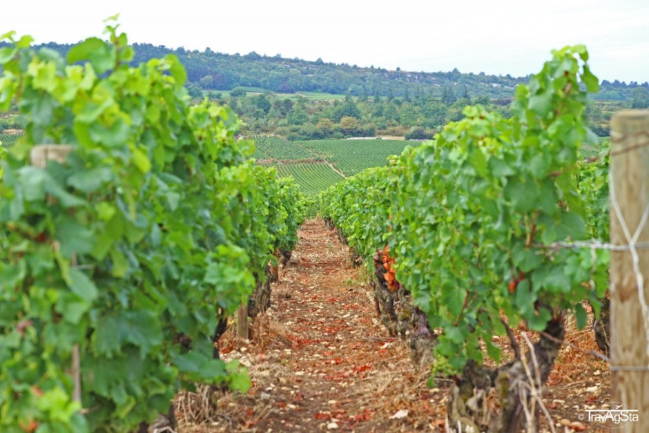 Routes de Grands Crus, Burgundy, France