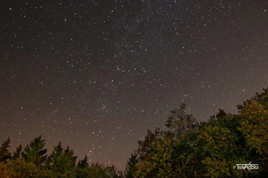 Starry sky with Milky Way and illuminated trees