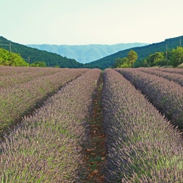 A lot of Provence, a bit of America!