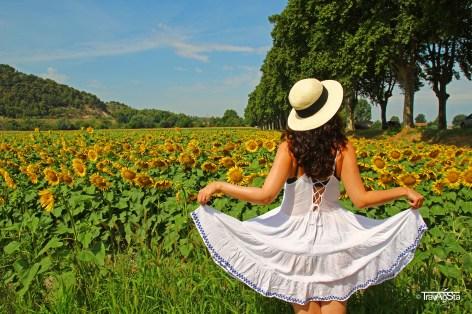 Sunflower field, Provence, France
