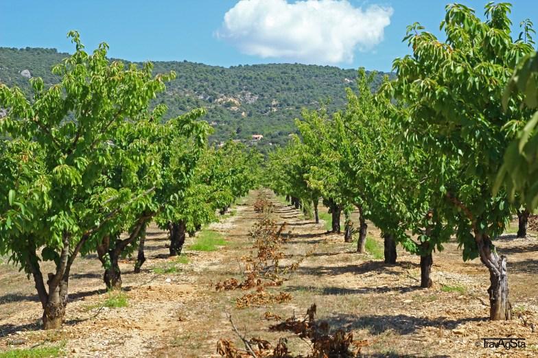 wine yards, Provence, France