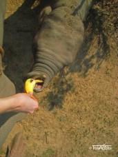 Elefant Ride (5)t
