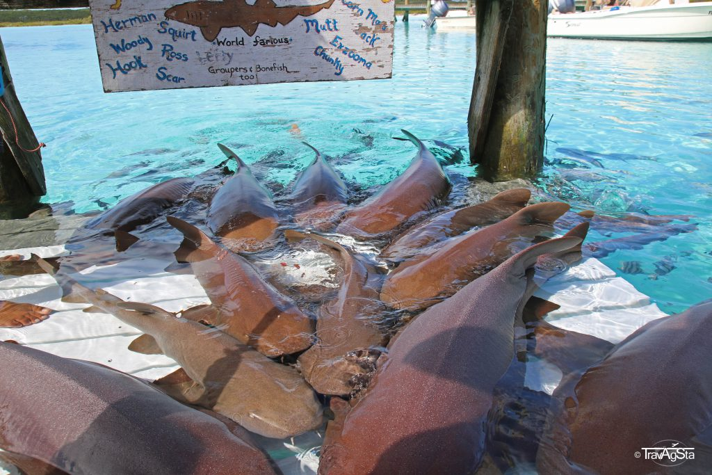 Compass Cay, Exumas, The Bahamas