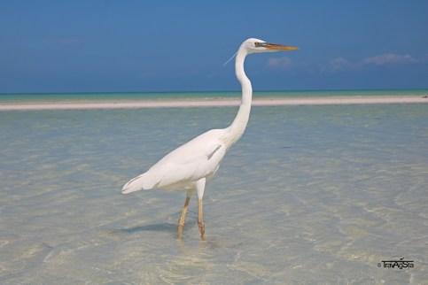 Isla Holbox, Yucatan, Mexico