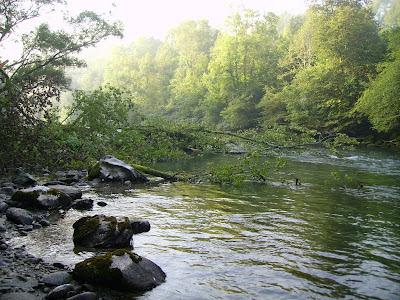Enlèvement d'arbres en rivière