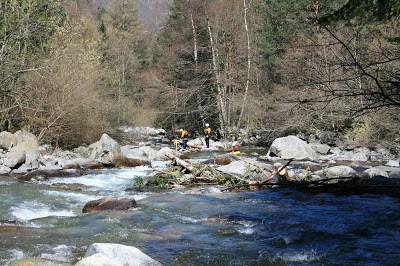 nettoyage arbres en rivière