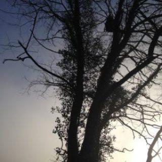 démontage d'arbre Hautes-Pyrénées