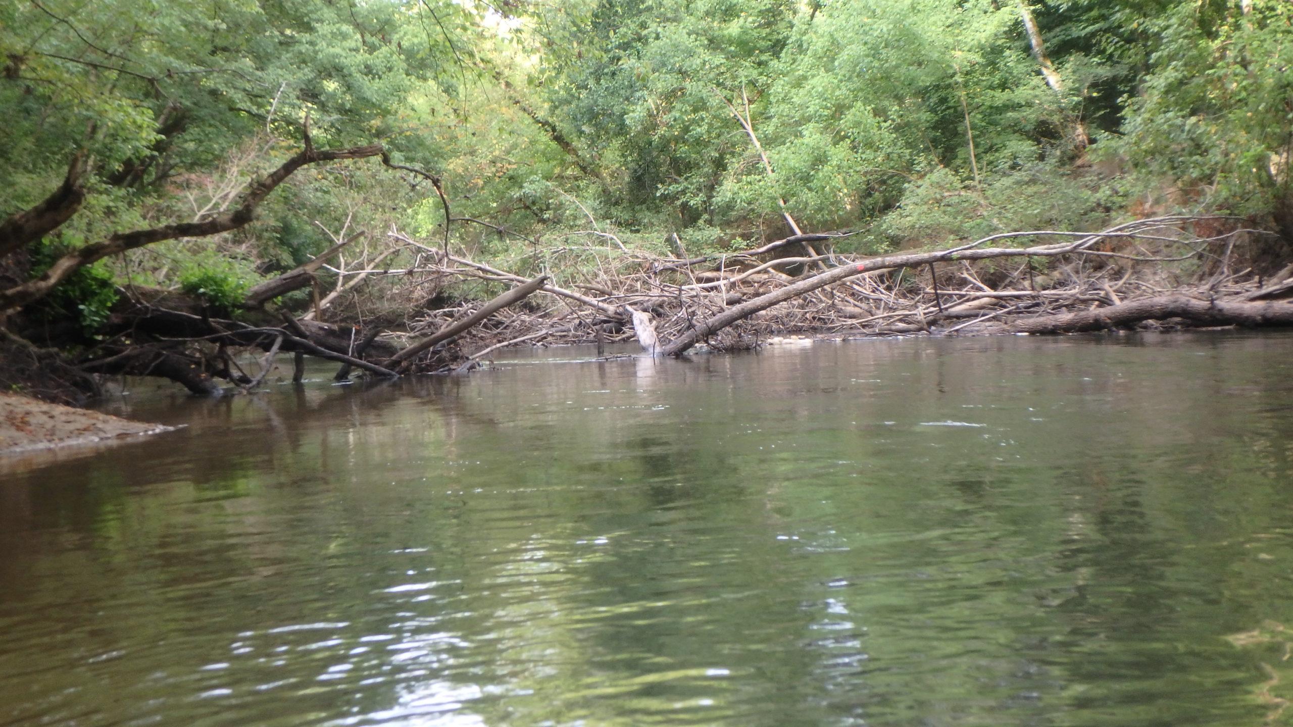 nettoyage rivière tempête Douze