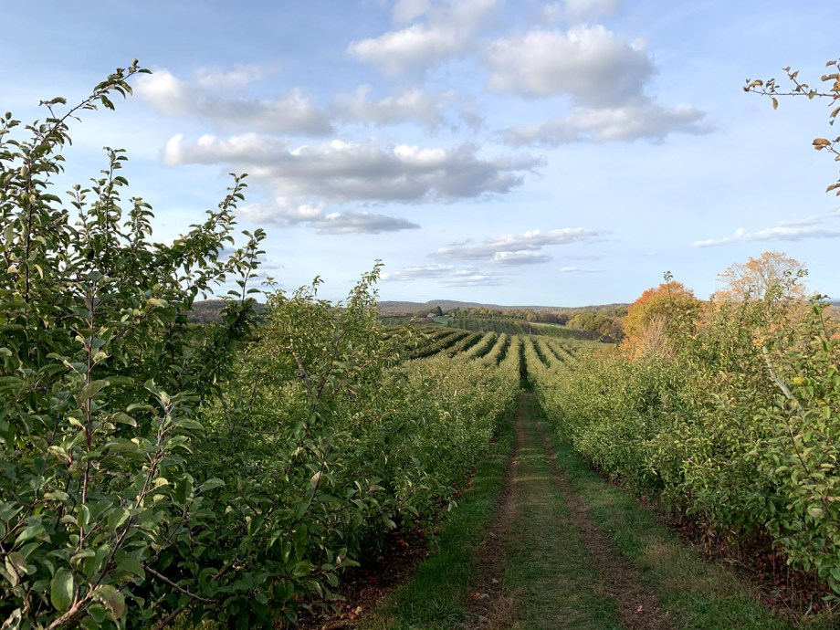 Lyman Orchards, courtesy of The Purposely Lost