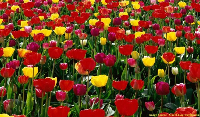 Fairs And Festivals In India In May: International Flower Festival