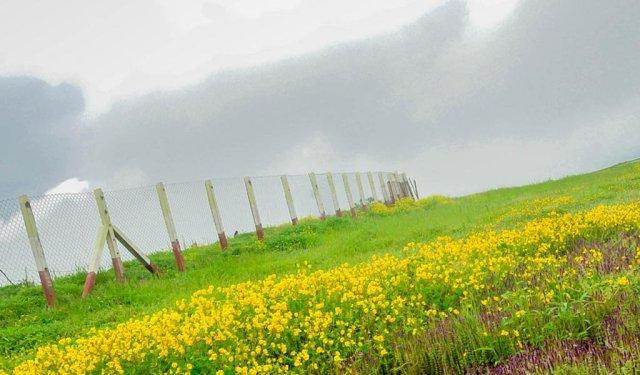 Maharashtra Trip : Kaas Plateau of Flowers