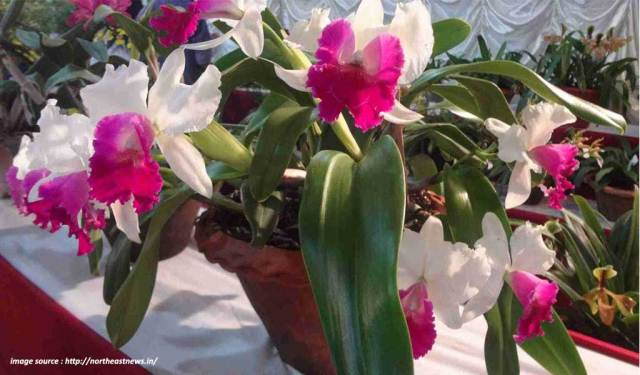 flower shows in india