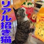 【年末ジャンボ】宝当神社の招き猫ふくちゃんに合って来た!【九州旅行記】