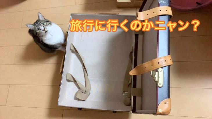 北海道から九州へ旅行①&猫のお留守番